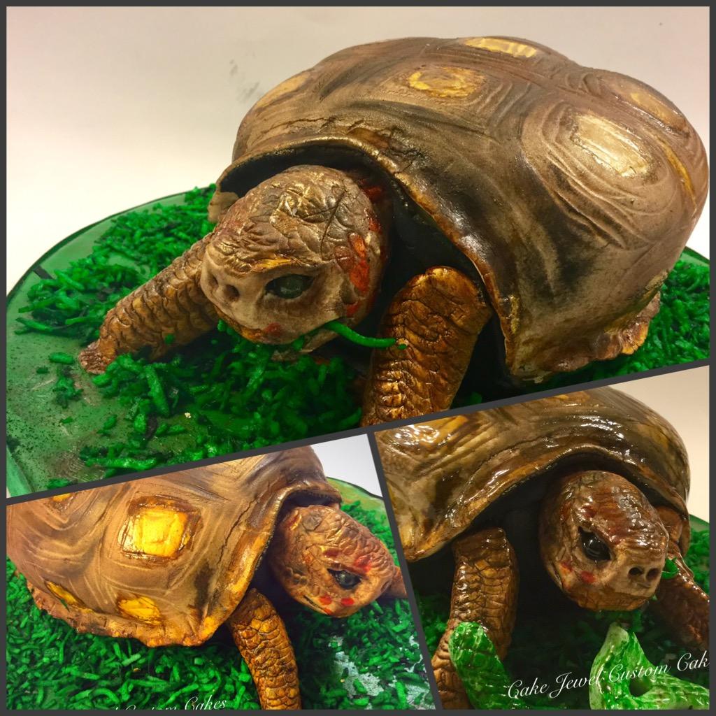 3D Tortoise Cake